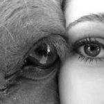 Справедлив ли закон о домашних животных