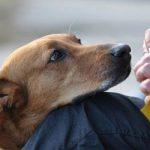 Внесение изменений в закон о защите животных