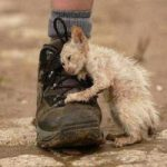 Идеальный закон о животных в России